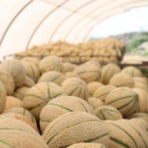 meloni-fetta